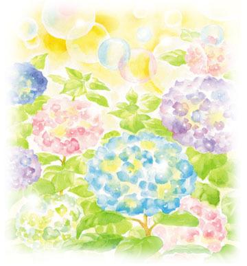 flora-ajisai.jpg